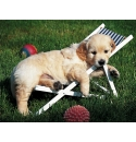 Golden Retriever 500stukjes Ravensburger