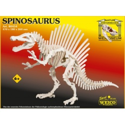 Spinosaurus, hout skelet bouw